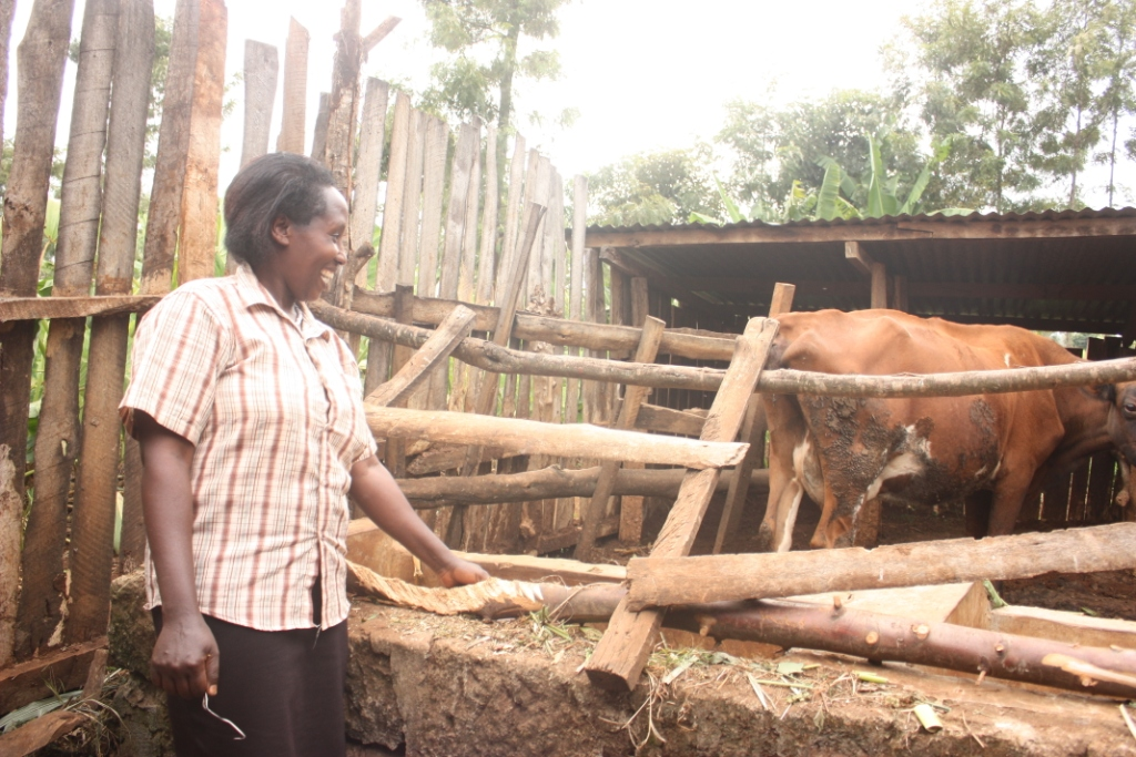 Damaris at her dairy cow shed