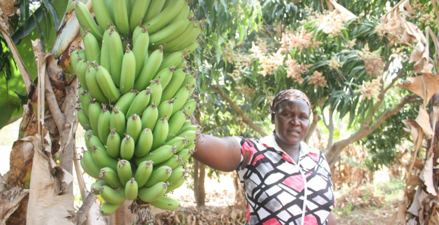 making-farming-climate-resilient-for-food-and-income-security