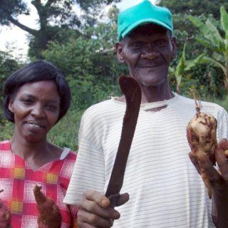 sweet-potatoes-save-a-village