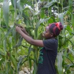 new-farming-skills-increase-yields-no-turning-back