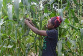 new-farming-skills-increase-yields-no-turning-back
